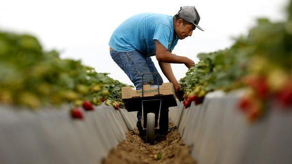 Local labor runs dry, sending contractors to Mexico