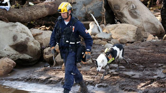 Pups helping rescuers