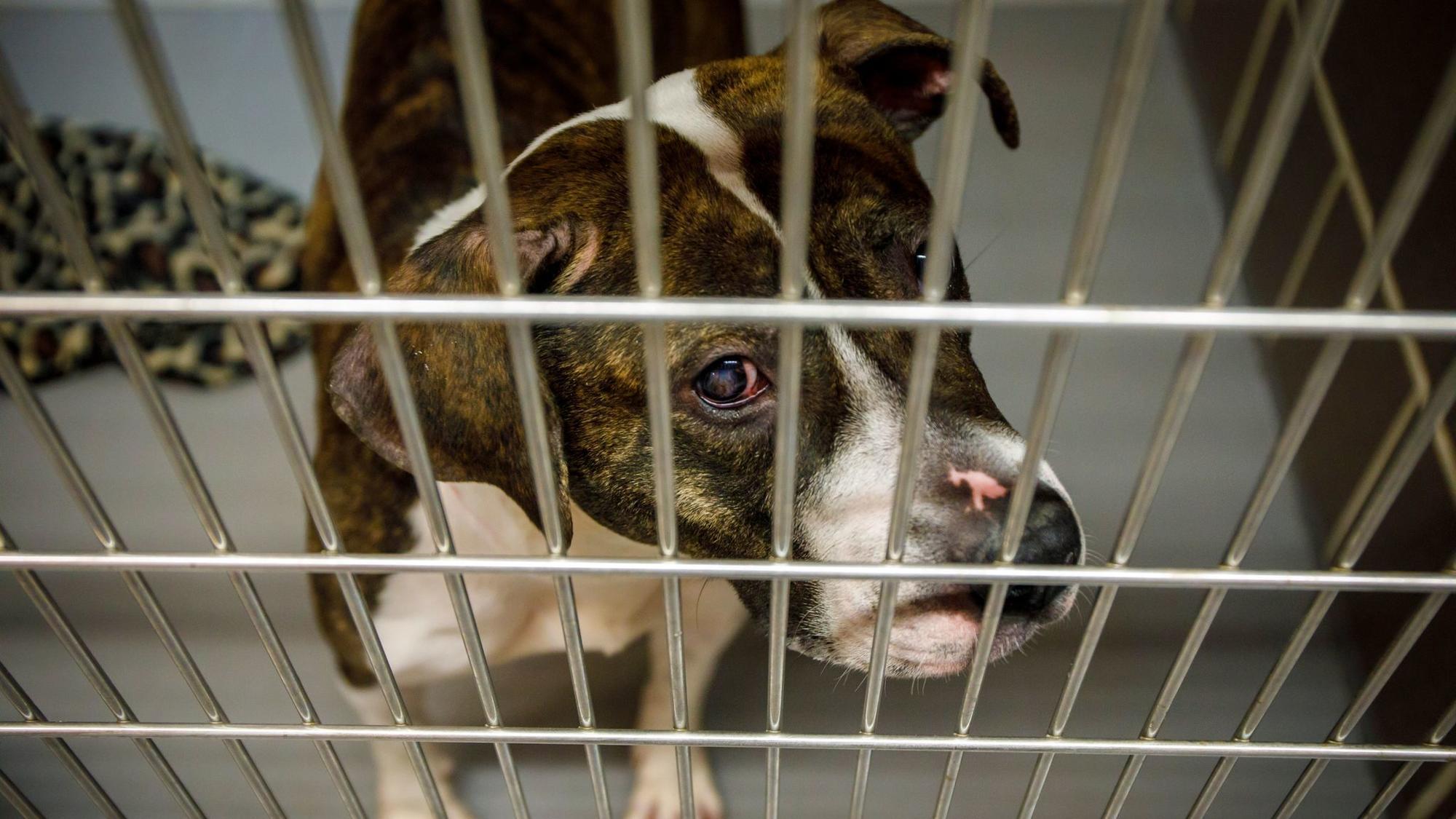 City Dog Shelter Hits Capacity Of 300 Has To Consider Euthanizing Animals