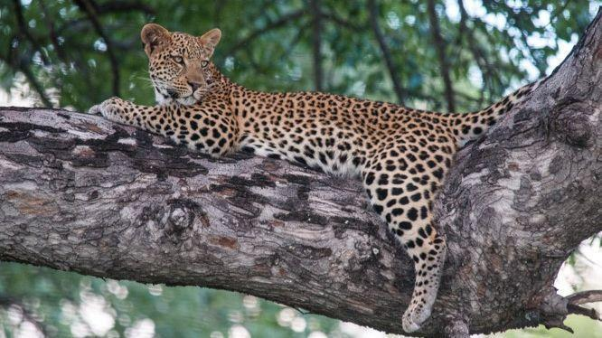 Tour Botswana's wild side on a Friends of the Santa Ana Zoo safari