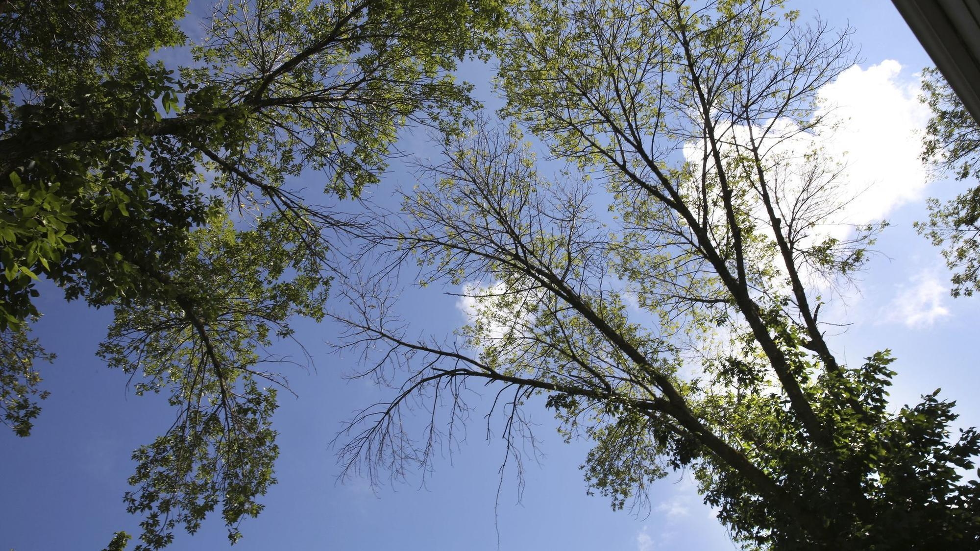 A neighbor\u0027s damaged tree hangs over nearby properties. What can ...