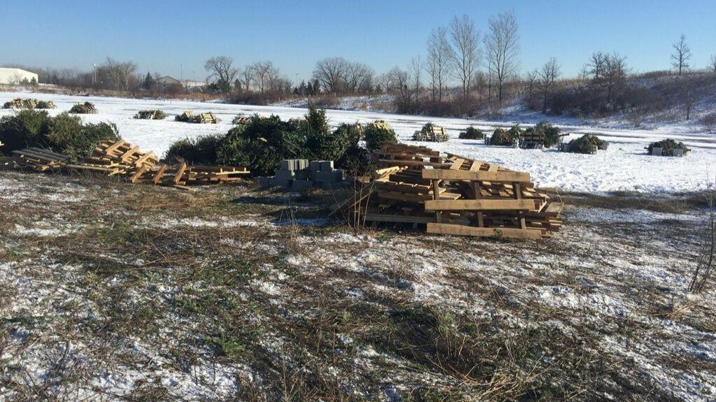 Recycled Christmas trees to spruce up Lake Glenview's fish habitat — when ice melts