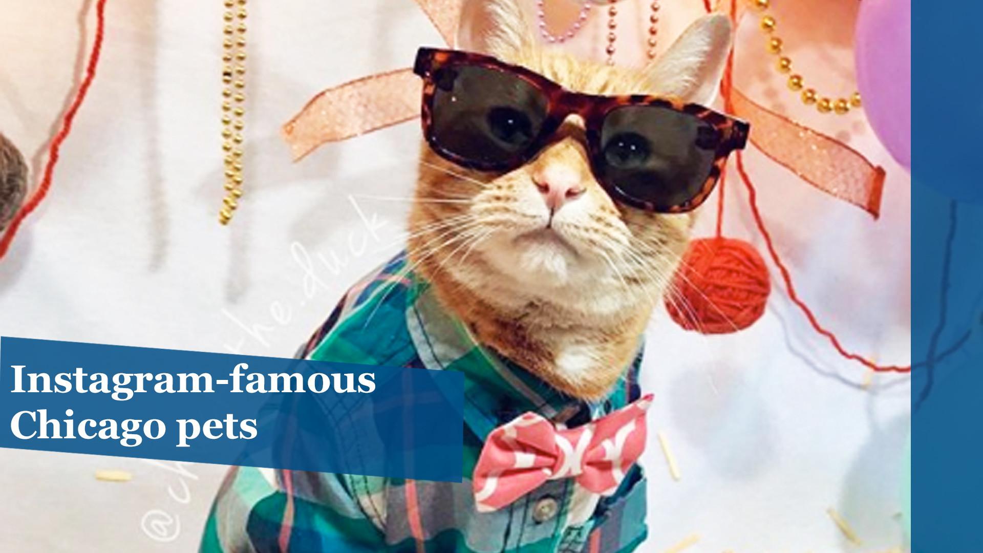 Instagram-famous Chicago pets