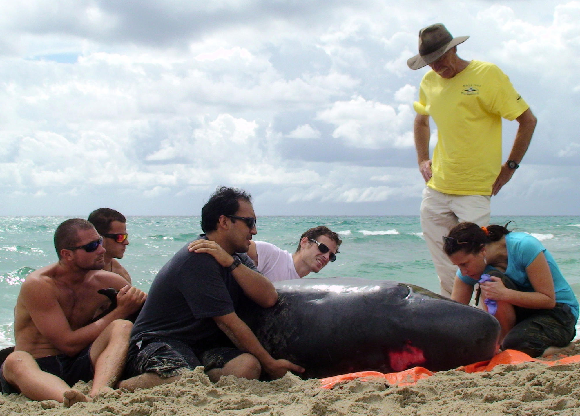Whale dies after washing ashore in palm beach county sun for Delray beach fishing