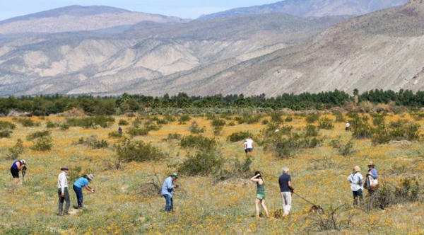 Lack of rain makes desert wildflower super blooms unlikely this year