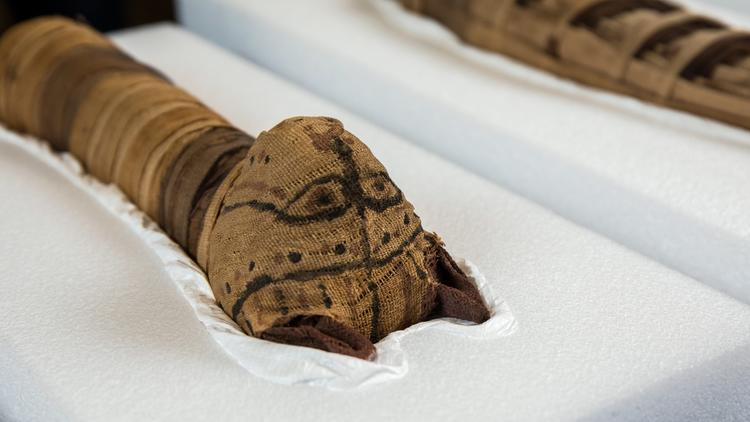 Cats and crocs among the mummies at new                          Field exhibit