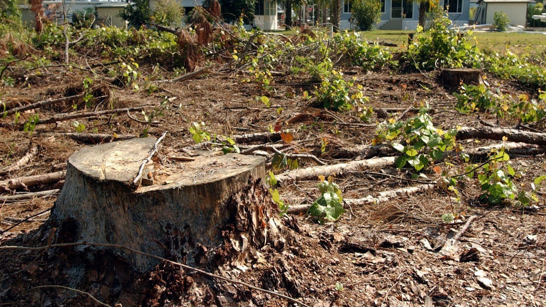 Home and Garden news - Yoo Word