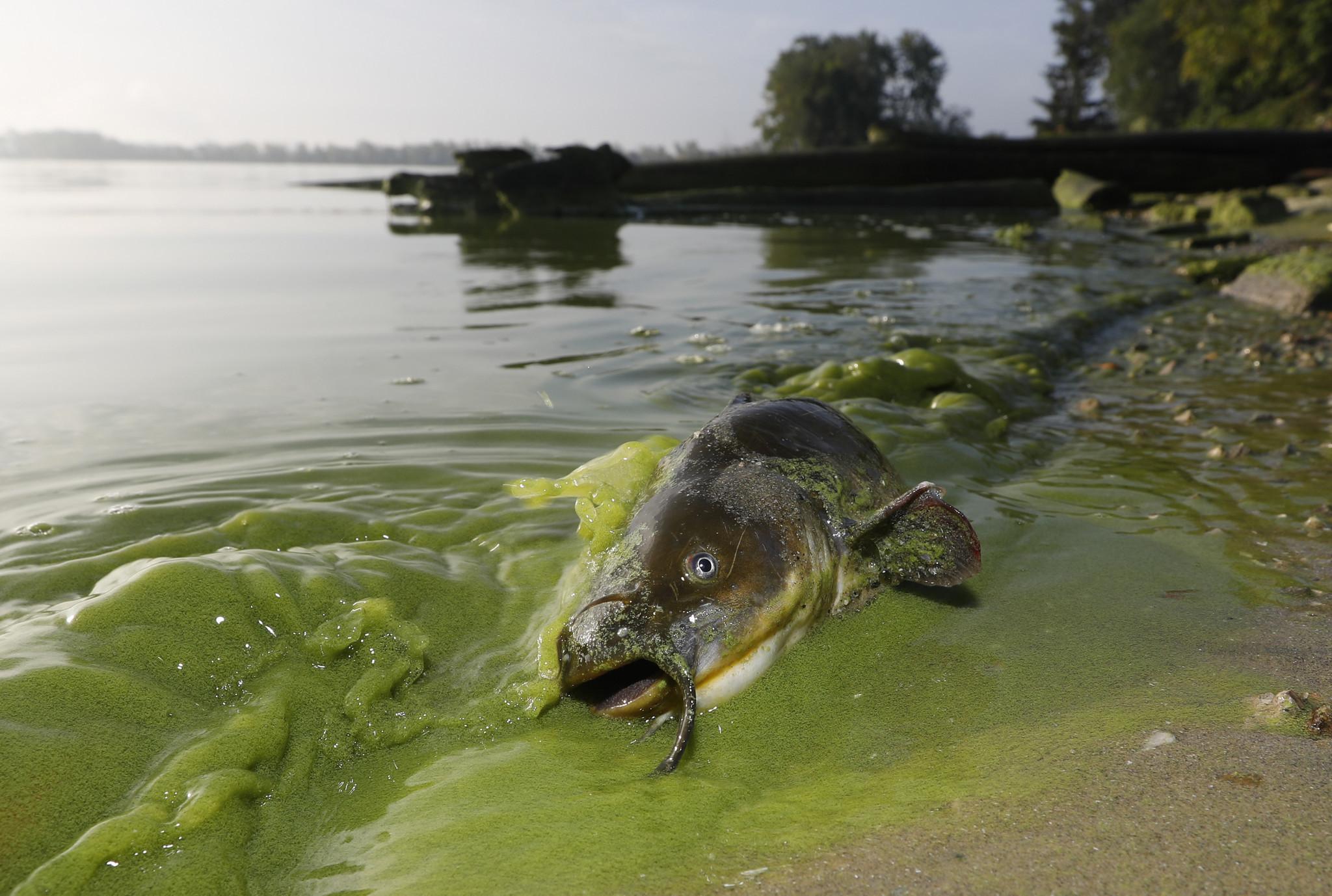 EPA plan seeks cuts in phosphorus pollution that causes algae masses in Lake Erie