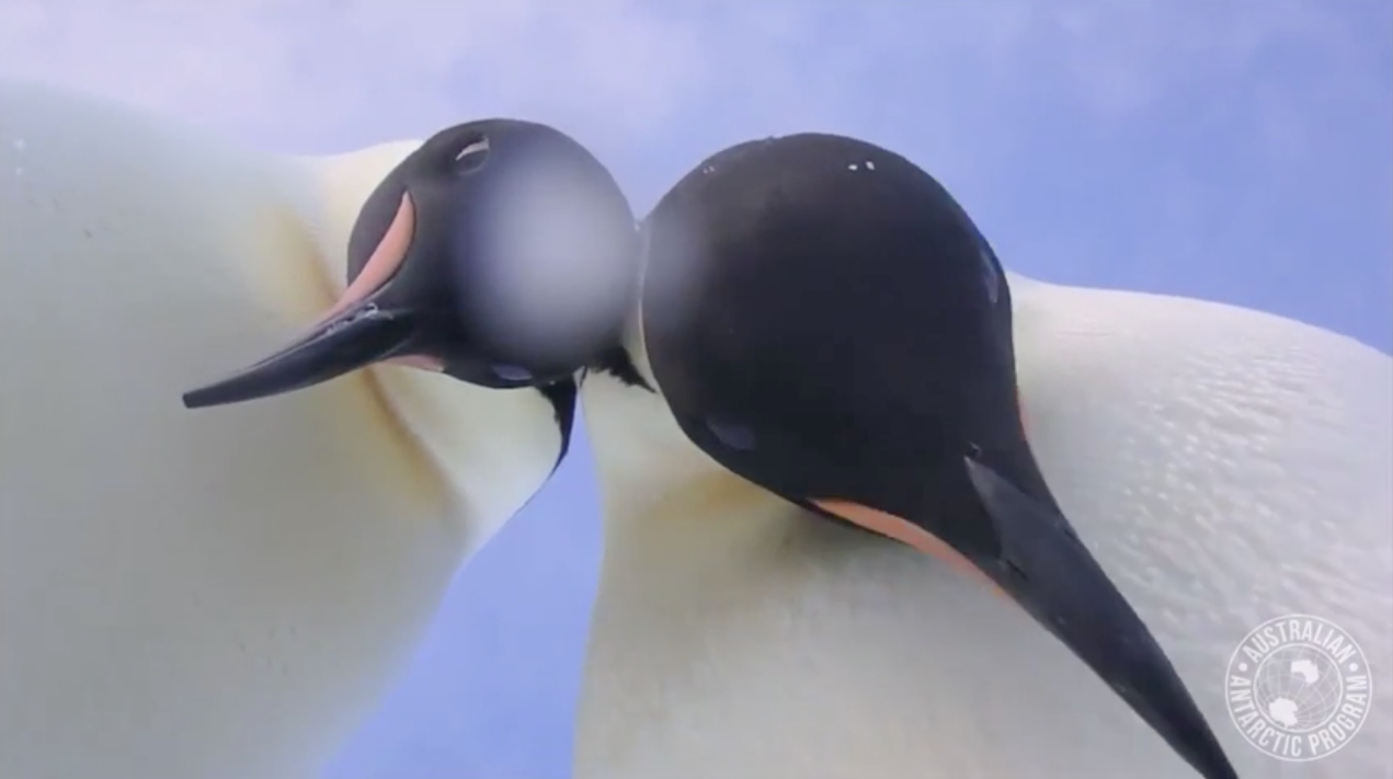 Penguins found a camera in Antarctica and captured a surprisingly good selfie