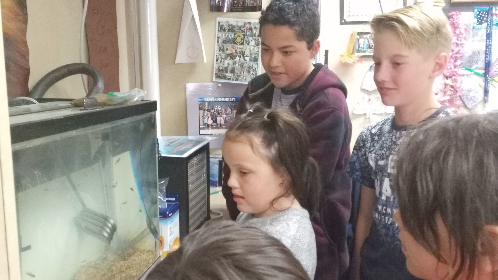 Hanson Elementary School first-graders get a close-up look at trout being raised in Joyce Schildhouse's fifth/sixth-grade classroom. Matias Valkama and Alexis Andrade observe.