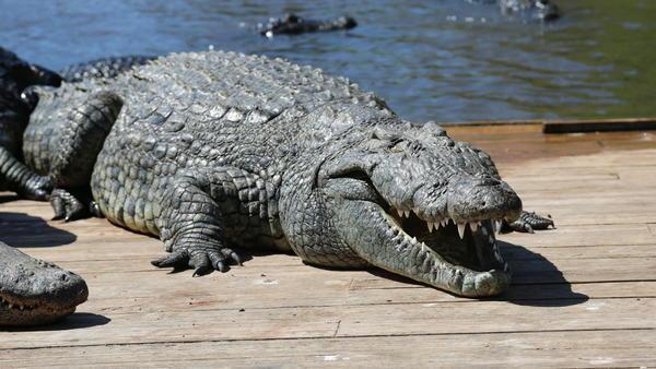 EN FOTOS: Descubre Gatorland Orlando a través de nuestra fotogalería