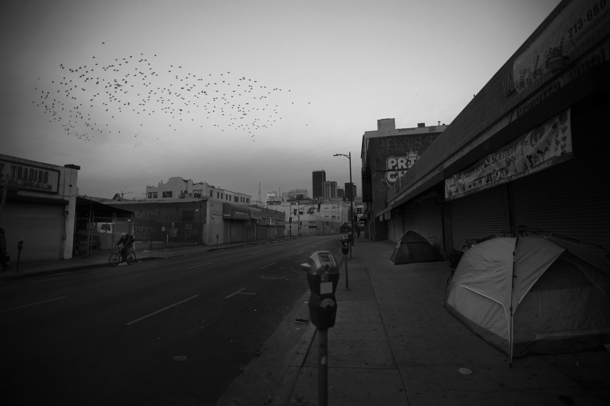 A flock of birds flies over a sidewalk encampment early one morning--as if they could lift up the m