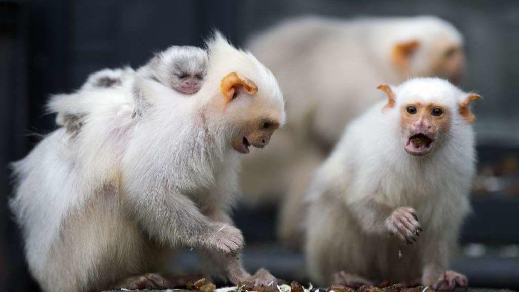 Monkeys surprised scientists by sharing even more when no one was looking