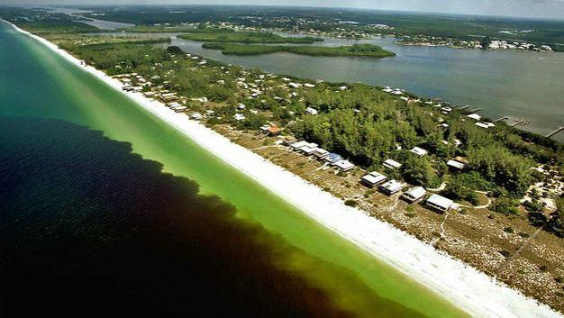 Red tide outbreak killing fish off florida gulf coast for Naples tides for fishing