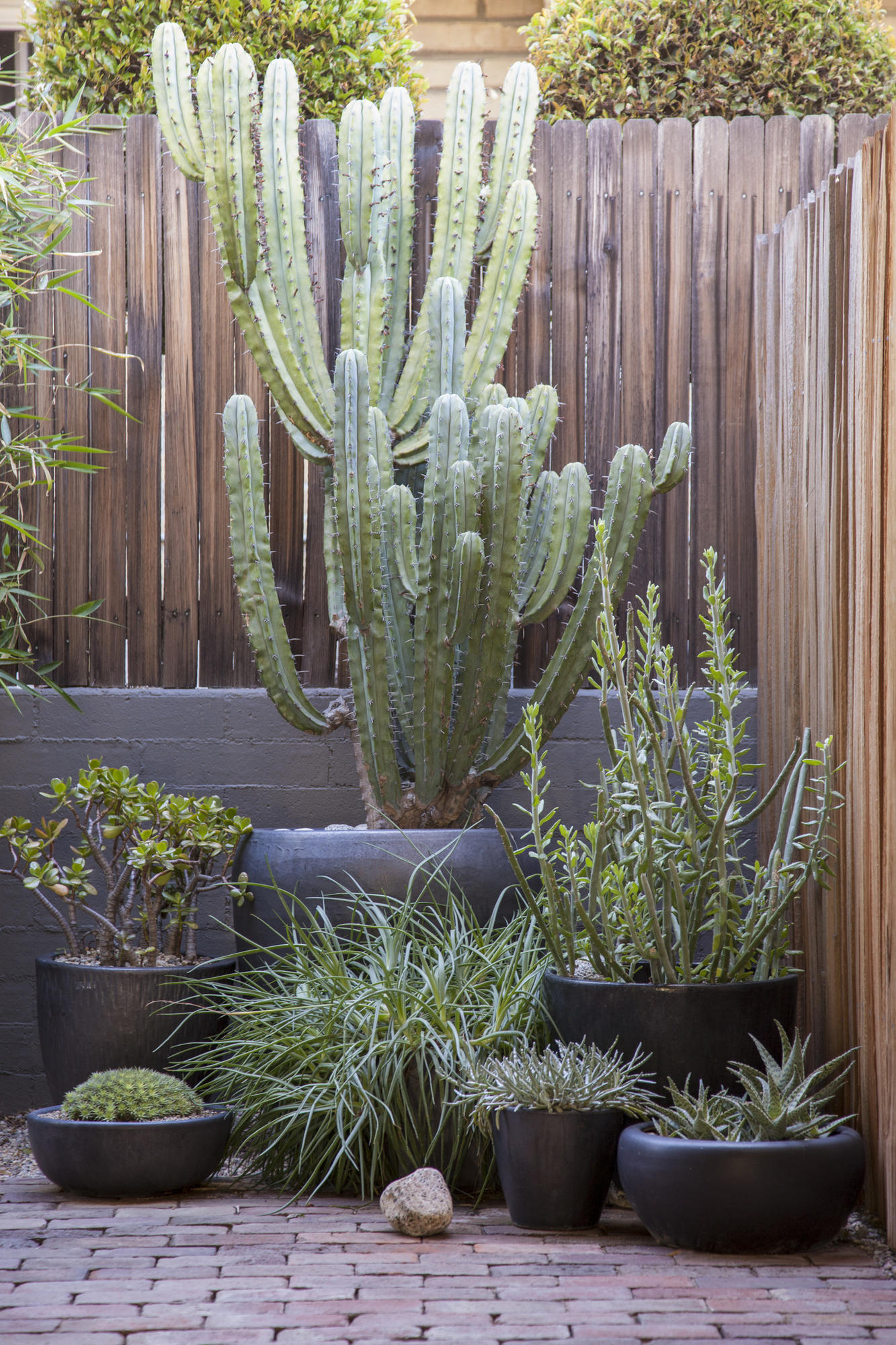 A new garden with a traditional twist in Pasadena