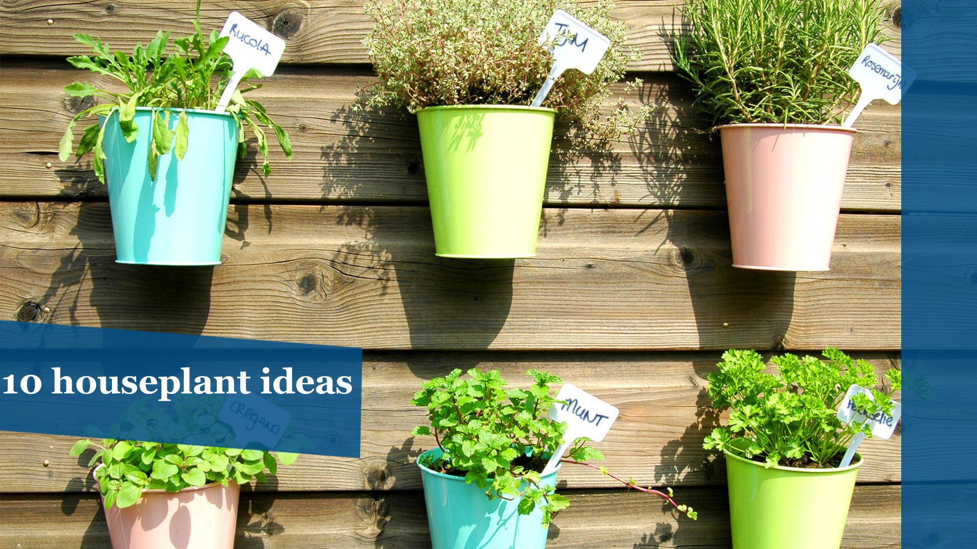 Go green: 10 fun houseplant ideas