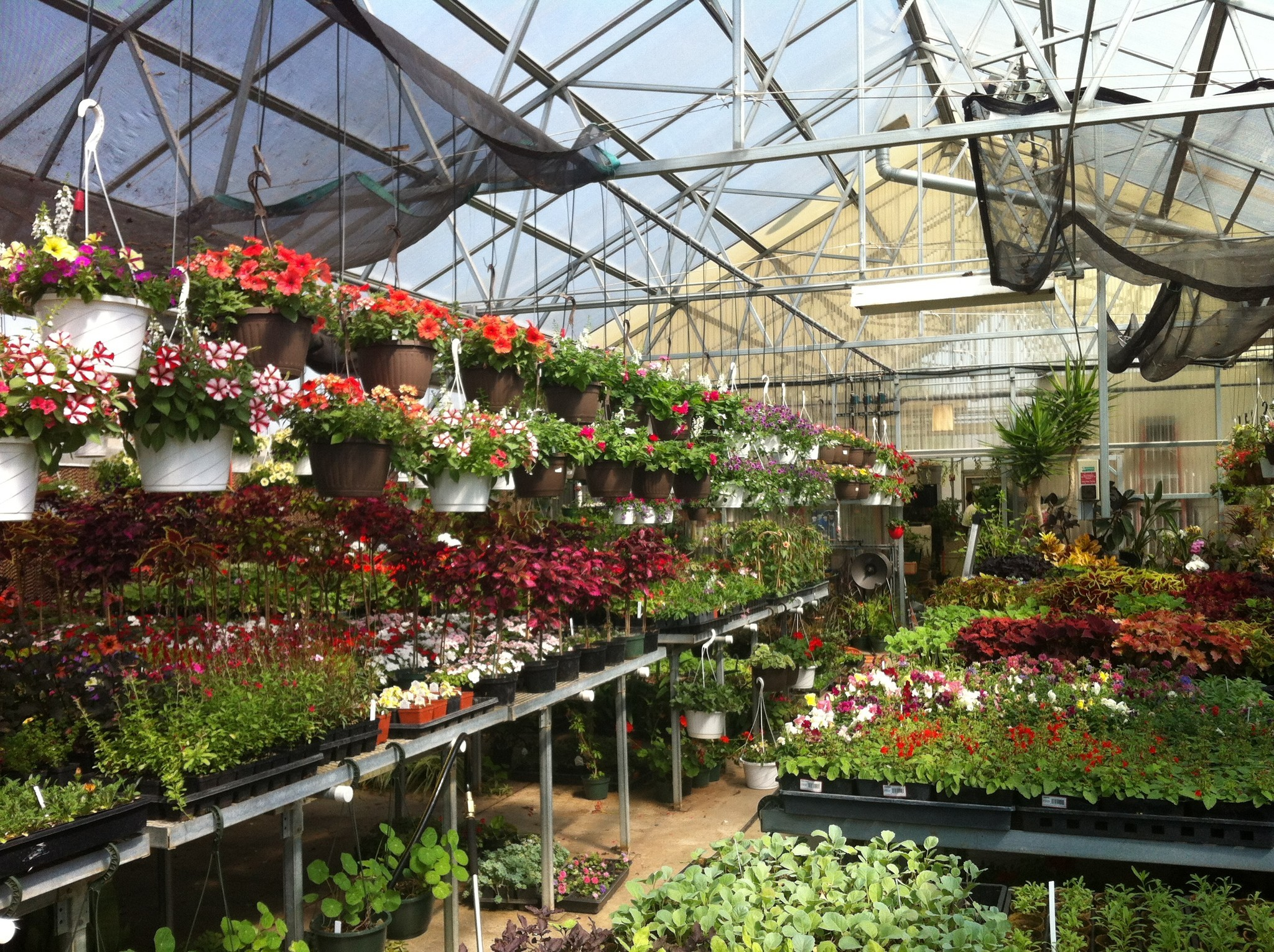Allendale Greenhouse Sale May 11 and 12 - Lake County News-Sun