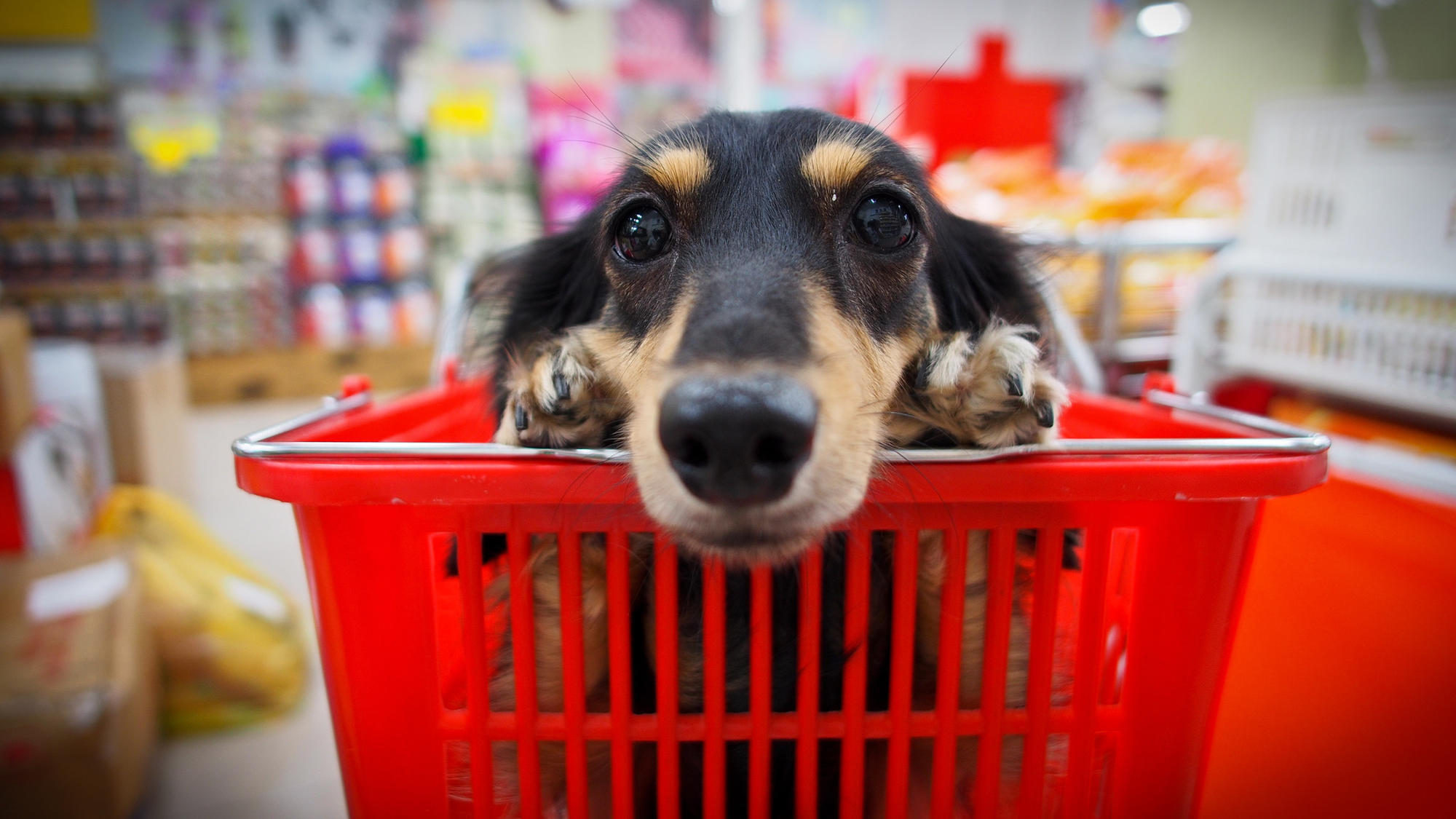 dog owners there are rules for shopping with fido even in pet friendly stores chicago tribune. Black Bedroom Furniture Sets. Home Design Ideas