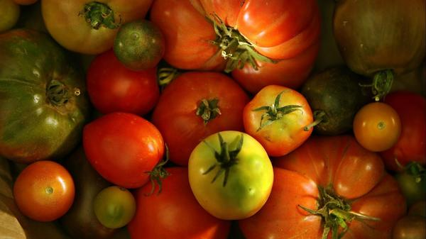 Early Girl, Cherokee Purple or Sweet 100? Readers share their tomato successes