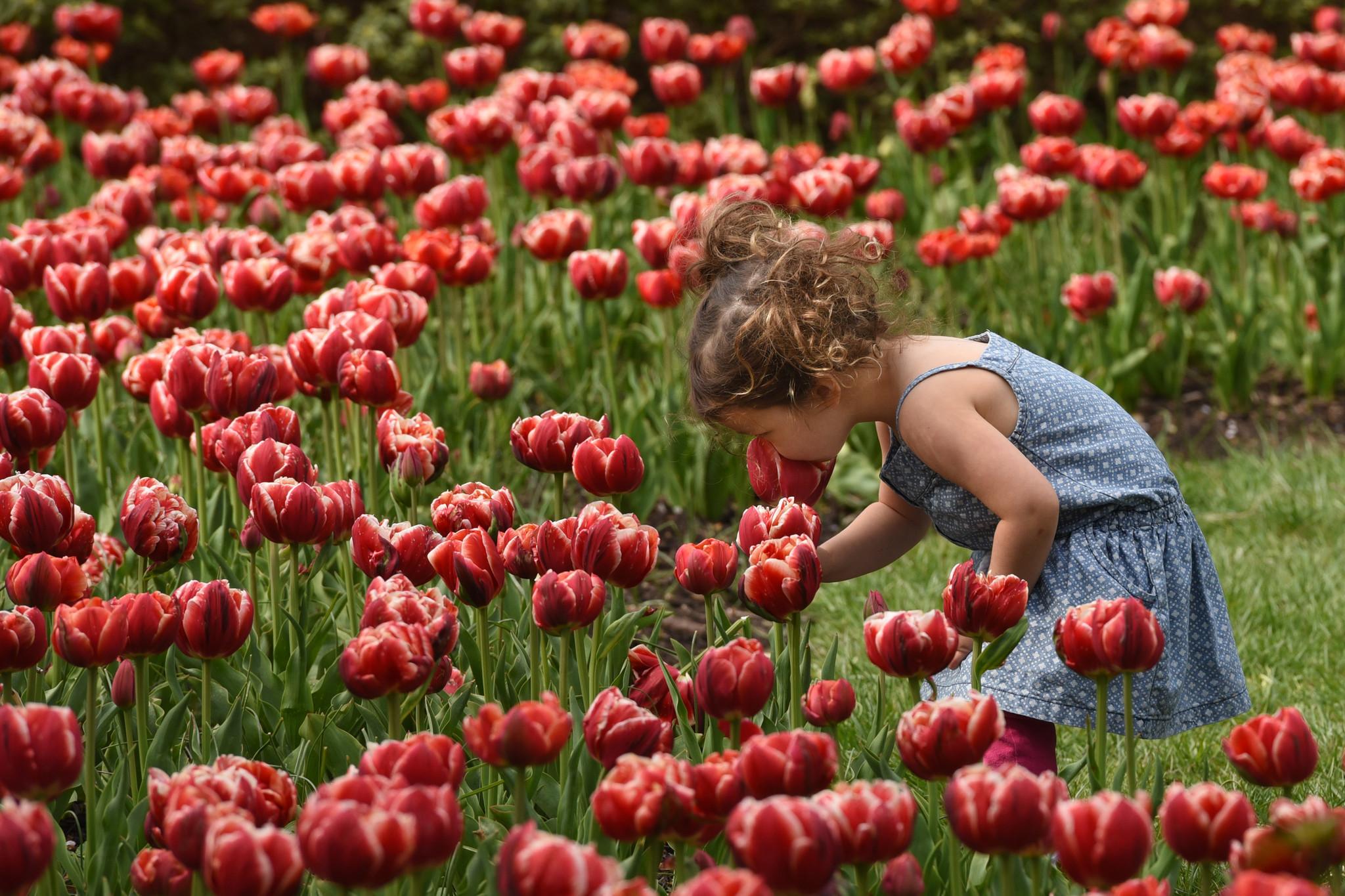 Your guide to spring fun in Baltimore - Baltimore Sun