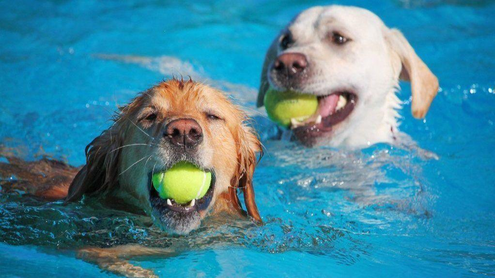 Doggie health club opening in naperville to feature indoor park doggie health club opening in naperville to feature indoor park three pools naperville sun solutioingenieria Image collections