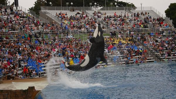 SeaWorld San Diego has biggest attendance drop among all North America theme parks