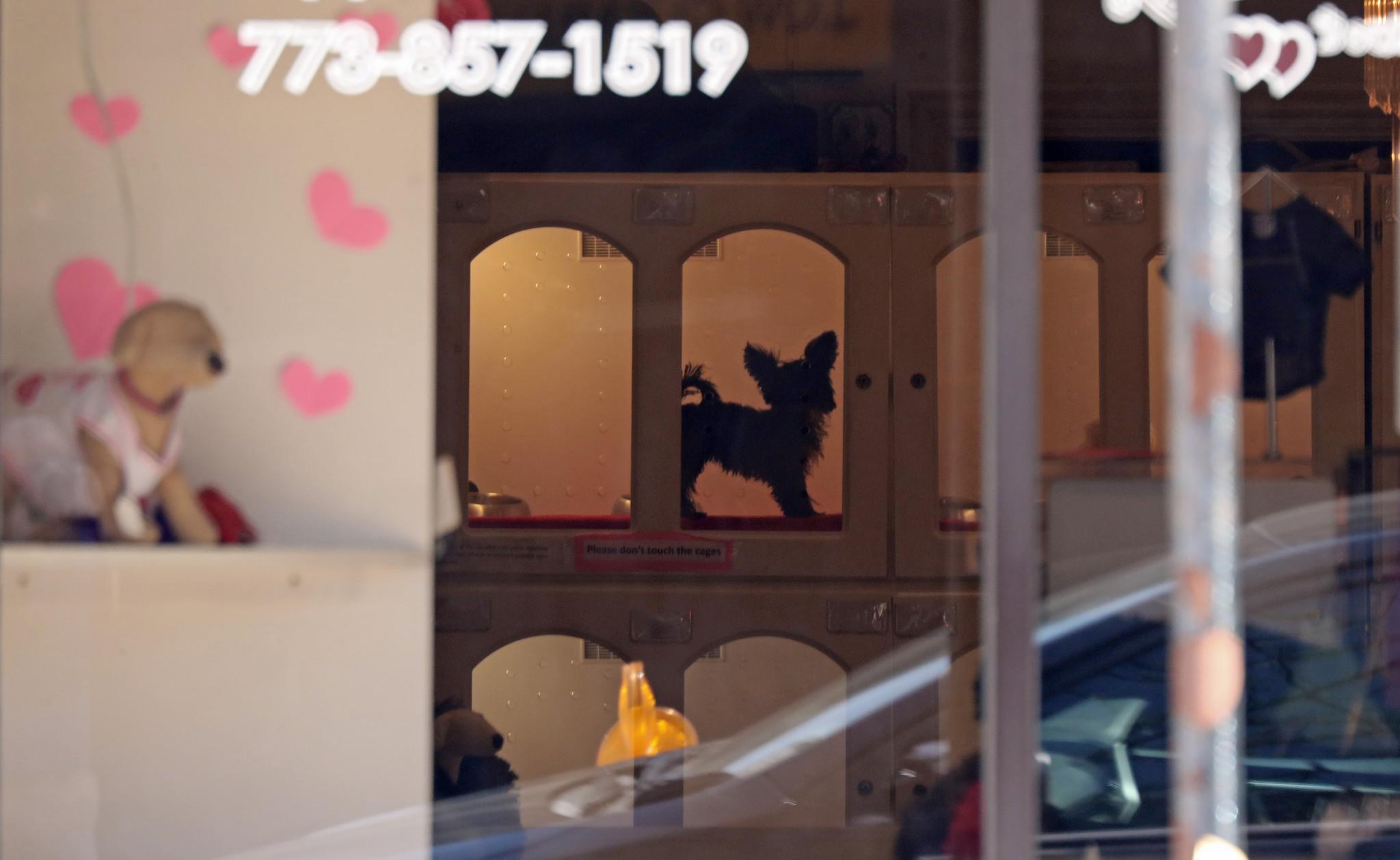 Best Dog Stores In Chicago