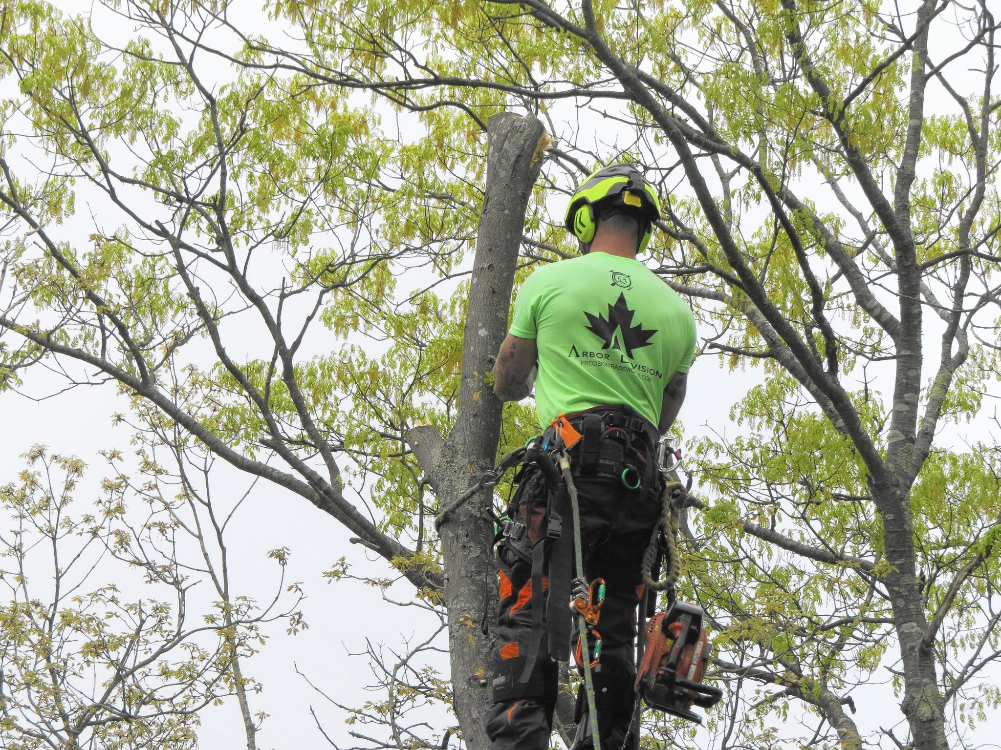 Salvaging White Oaks Lost To Gypsy Moth Devastation