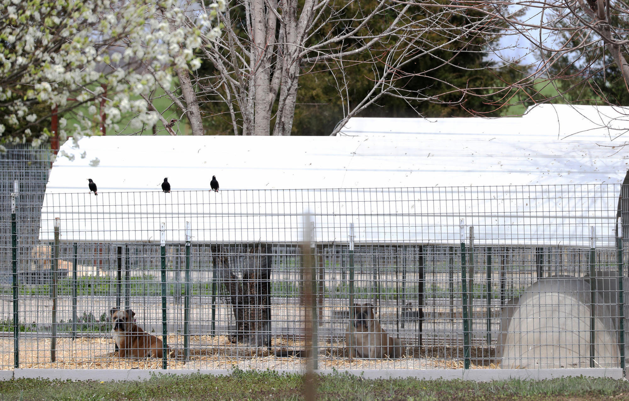 Revised Ordinance Aims To Stop Breeders From Selling Rescue