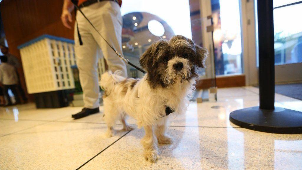 Orlando Hotels Foster Dog Gets Quick Adoption Orlando Sentinel