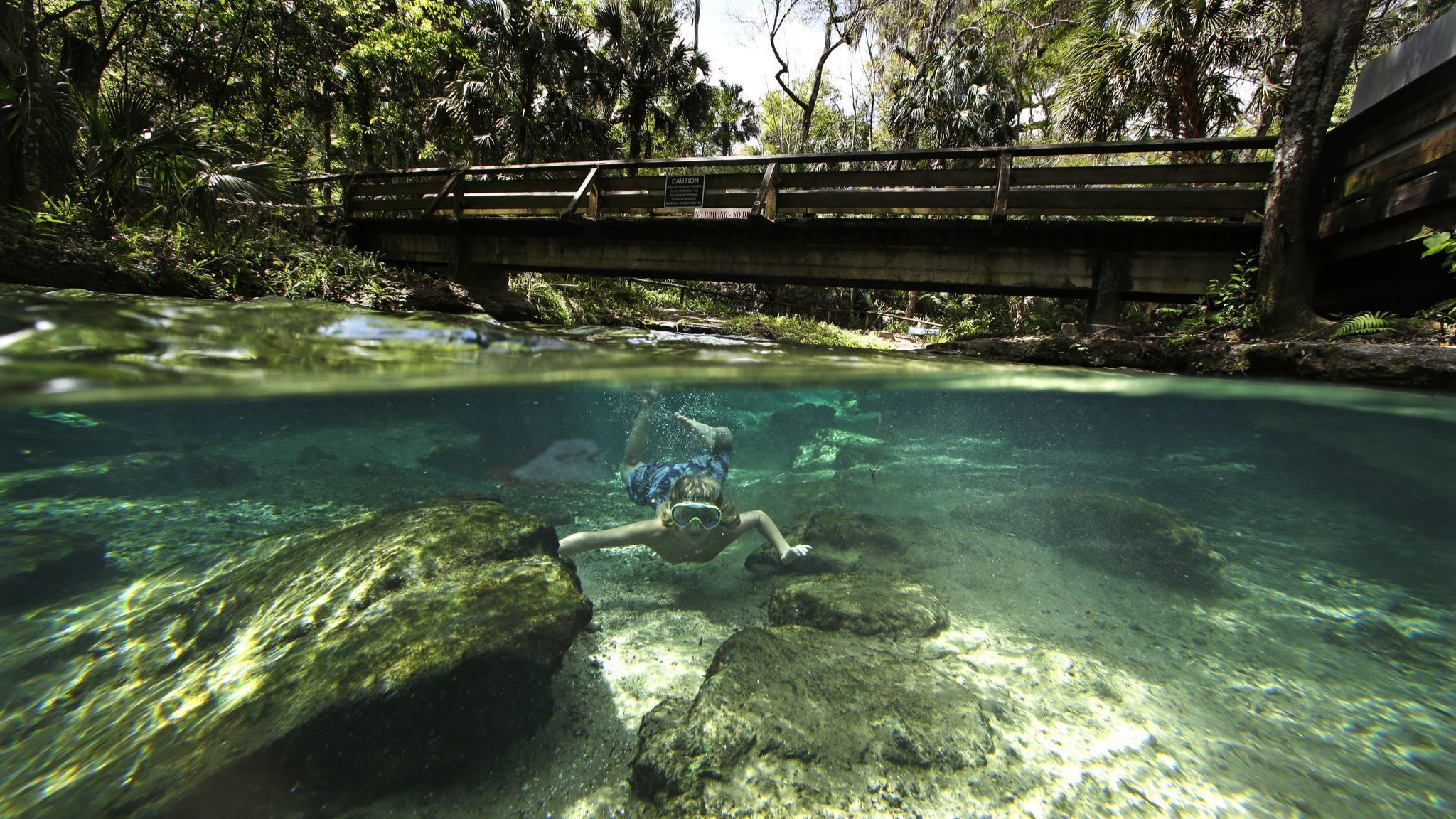 Asa Meslar swims along the Rock Springs Run at Kelly Park in Apopka, Fla., on Tuesday, March 10, 201