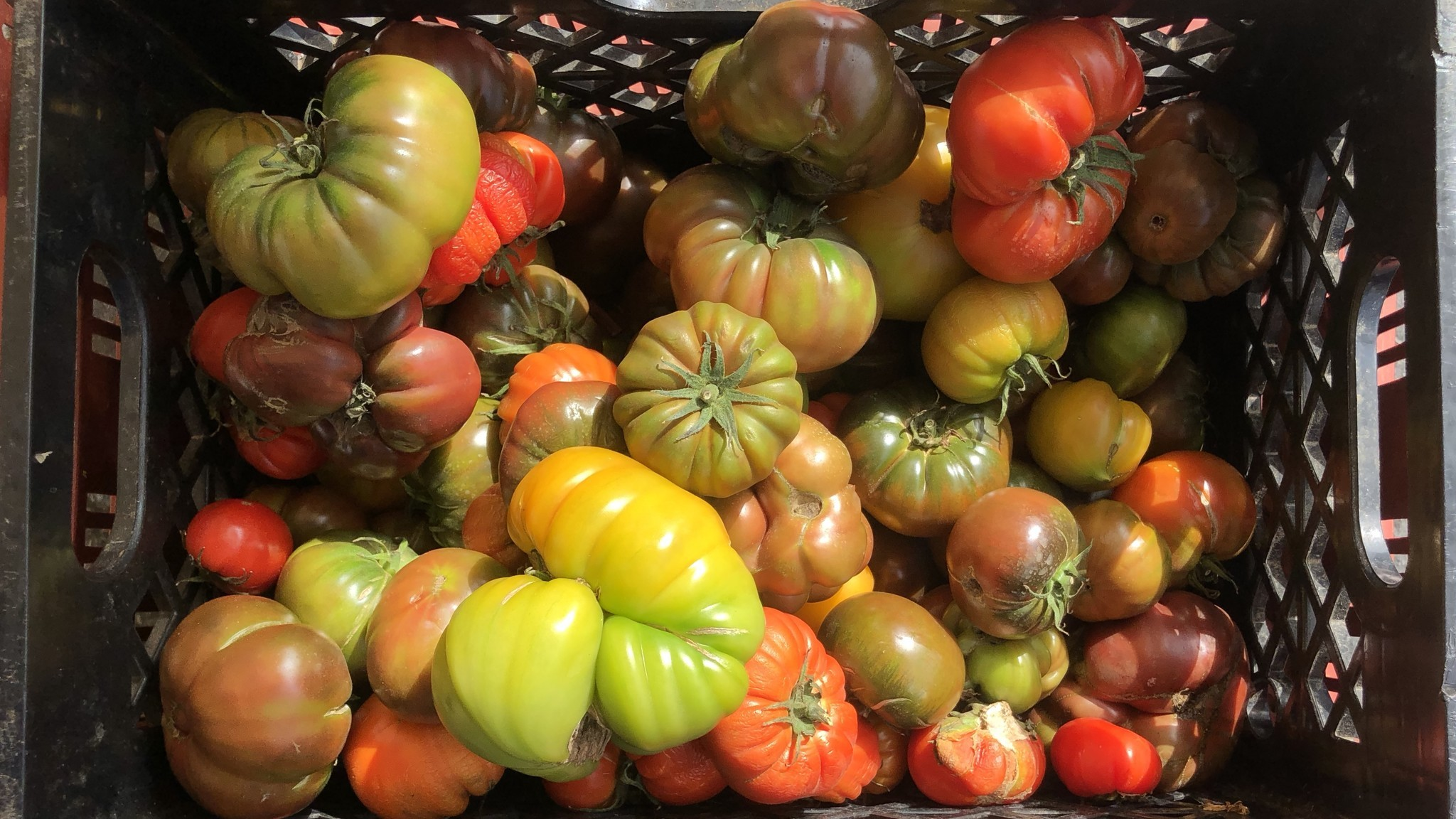 Gazpacho, lasagna and other great ideas for tomatoes, now in season