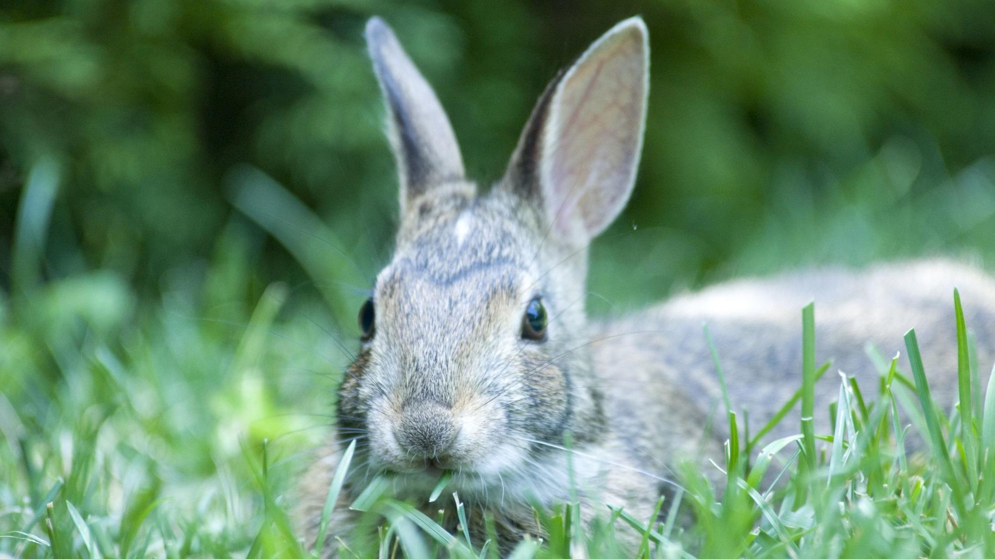 Rabbits feasting on your garden? Wire fencing is your friend ...