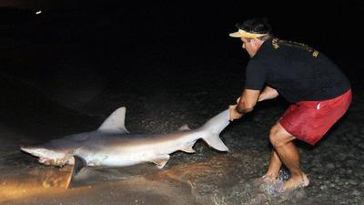 Florida to restrict shore-based shark fishing at many public beaches