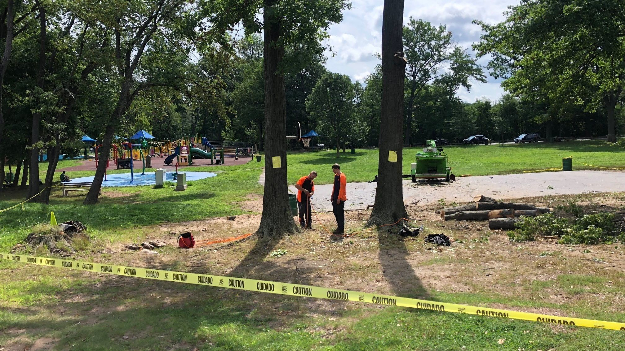 After Boy's Injury, Hartford Cutting Trees In Goodwin Park | Hartford Courant