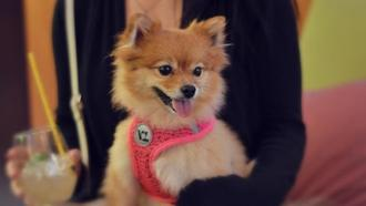 National Dog Day event has drinks for humans and treats for you-know-who