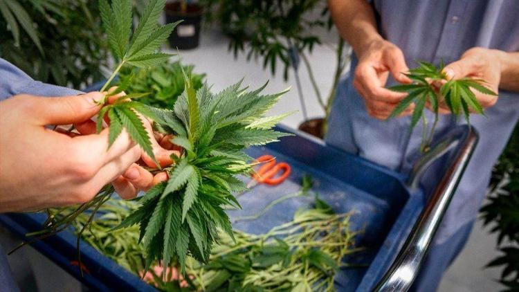 State Approves Use Of Medical Marijuana For Stubborn Headaches, 7 Other Conditions