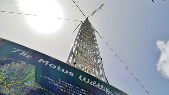 This new tower at Zoo Miami tracks birds from North to South America