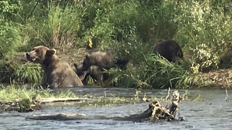 A group of San Diegans saw at least five sets of mothers and cubs on Margot Creek during a trip last month to Alaska.