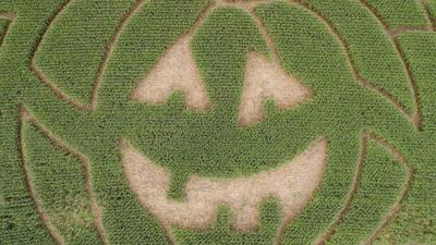 Finding Your Way To (And Through) Connecticut's Corn Mazes
