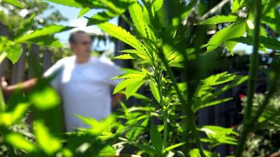 Baby Boomers Rival Teens In Marijuana Use, Federal Data Show