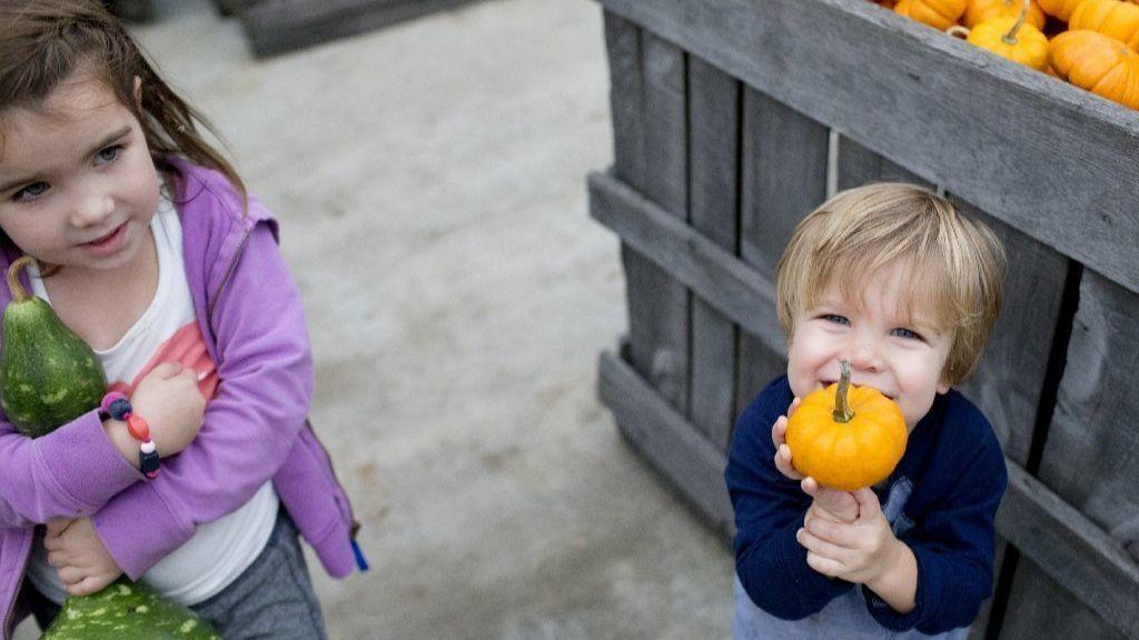 Weber's Cider Mill Farm in Parkville offers fall fun activities, bounty of apples, pumpkins | Baltimore Sun