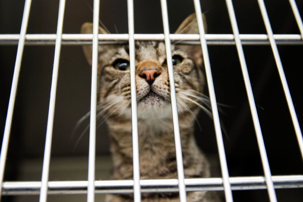 Don't leave pet tied up outside in a hurricane; Senate bill would send you to jail