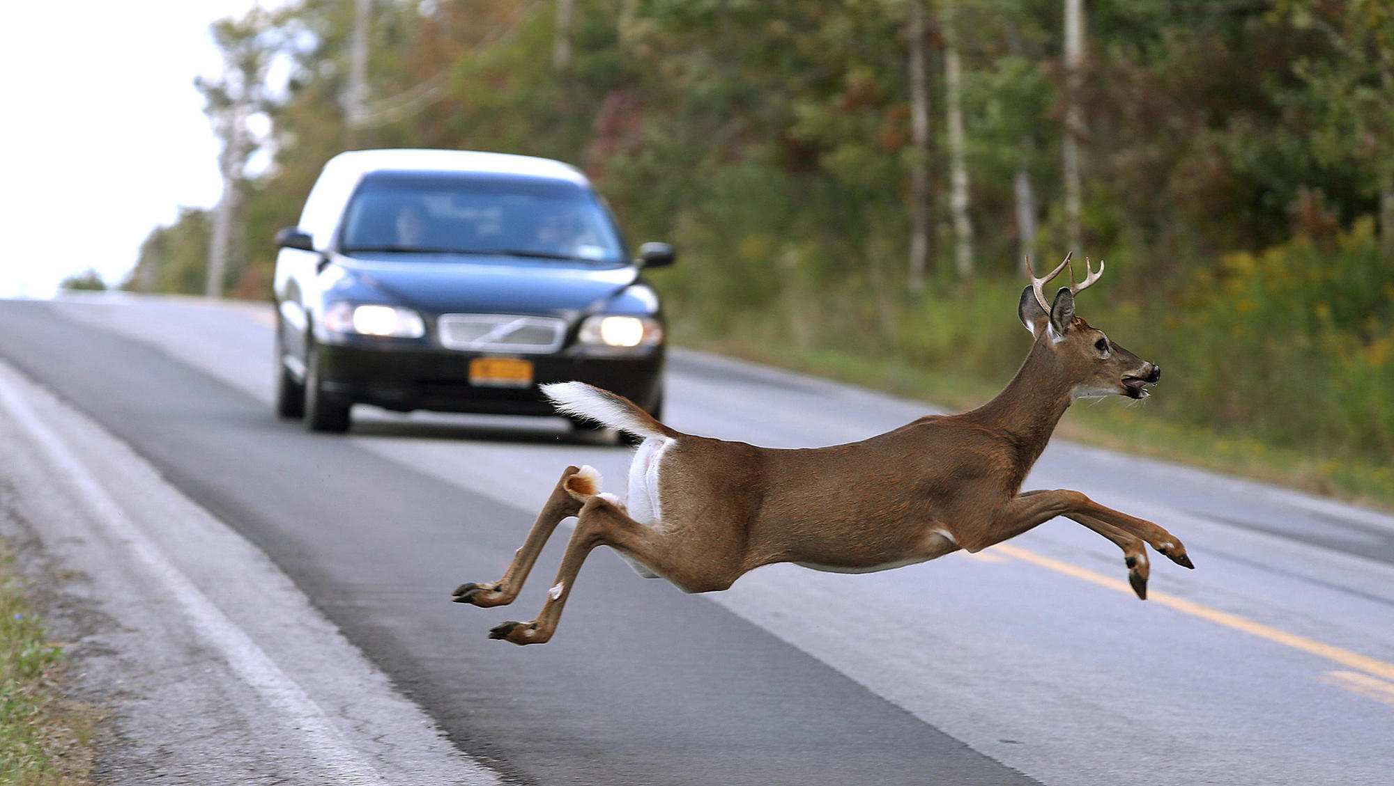 Illinois drivers beware: Deer are romancing, and they're on the roads