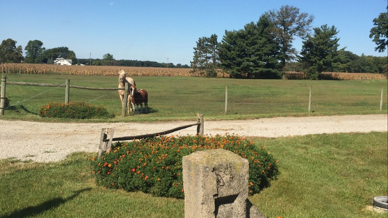 Marigold blossoms have a long family farm history