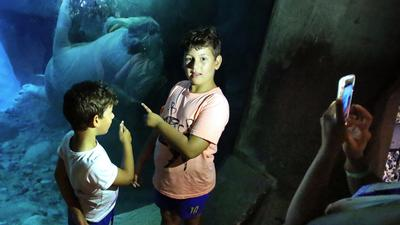 SeaWorld Orlando tour offers close encounter with walruses