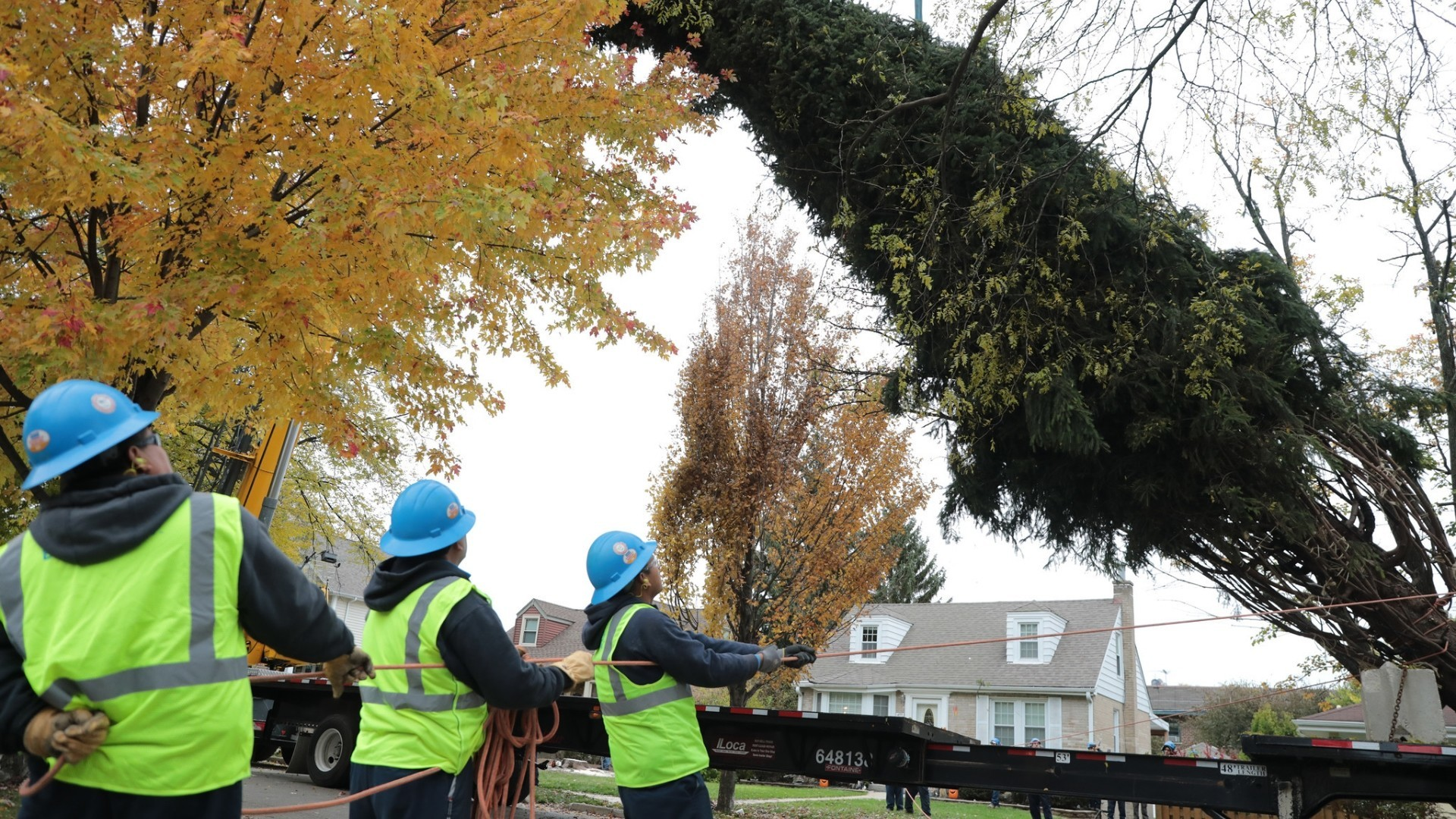 norway spruce in elmhurst selected as city of chicagos christmas tree chicago tribune - Chicago Christmas Tree