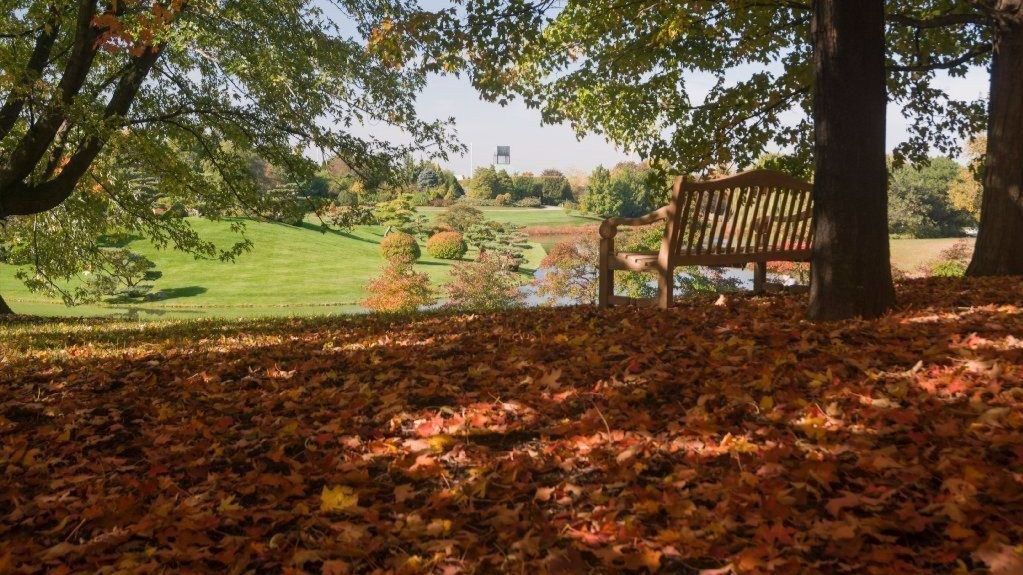 How to manage that accumulation of fallen leaves