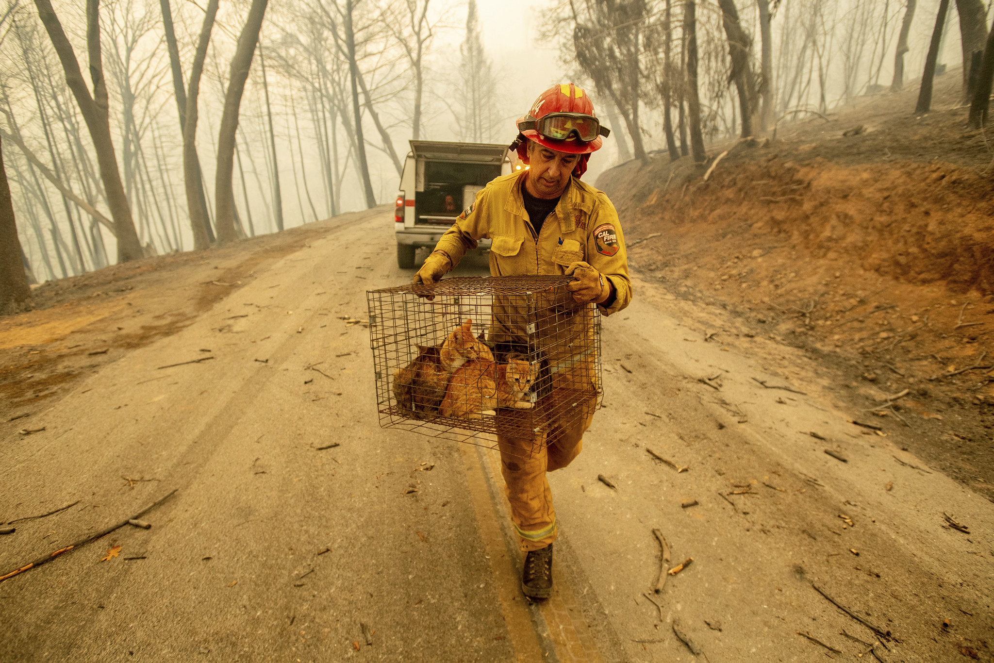 Surviving the Camp Fire was hard enough. Now these animals have to find their humans.