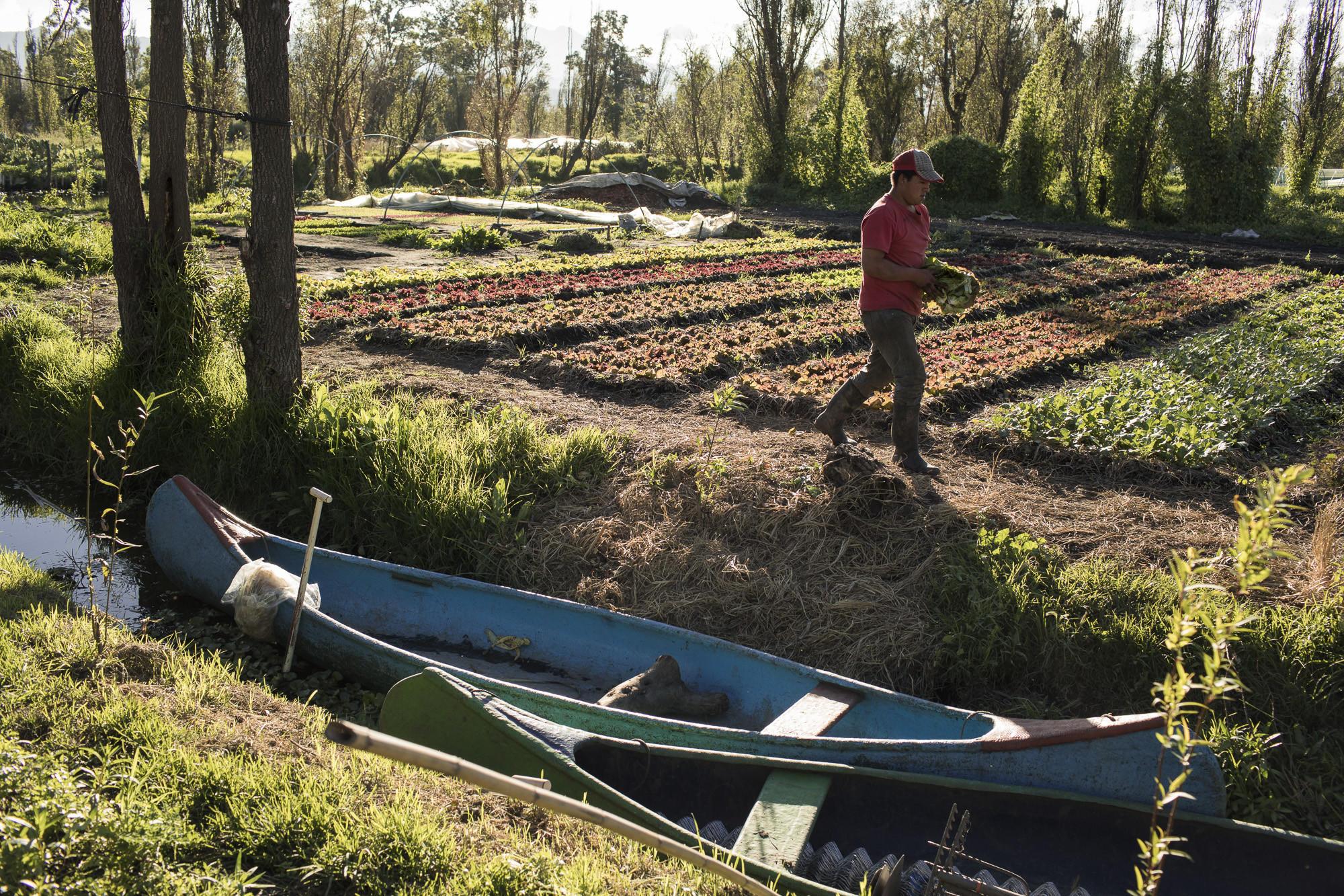 la-fg-mexico-farming